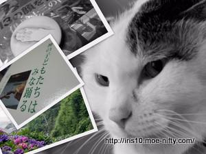 DVD「13の顔を持つ男 伊丹十三の肖像」と猫。
