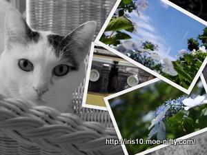 青空試し撮りと猫。