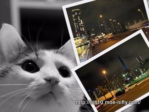 夜景試し撮りと猫。