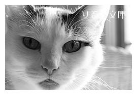 猫とわたくし