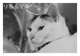 猫とわたくし「よい脚本よい映画」