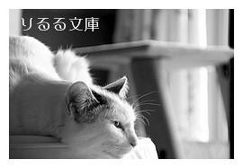 花にもの思う猫