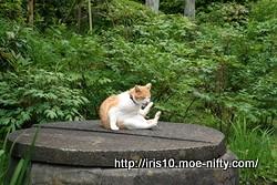 浄妙寺の猫さん