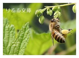 花粉集め中のハチ