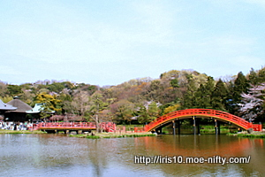 今年の桜もよい桜 金沢文庫・称名寺