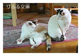[photo]美猫