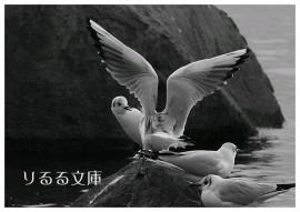 2007012003g.jpg