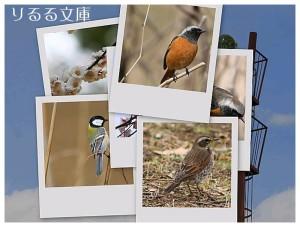 collage20080305.jpg